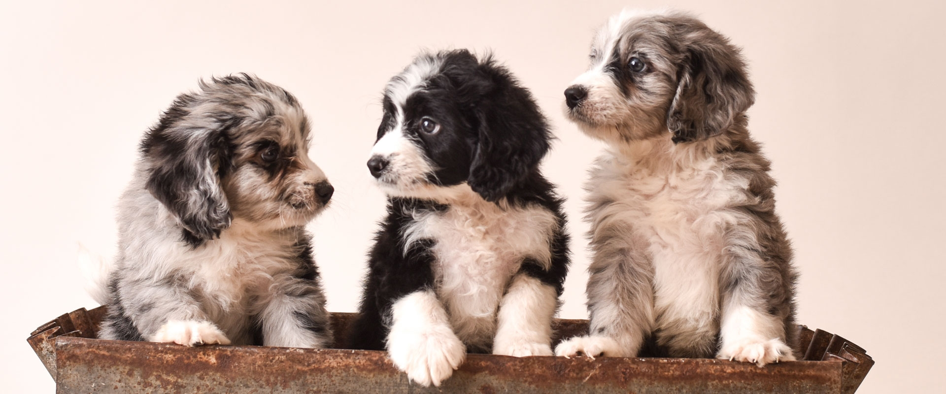 three-puppies.jpg